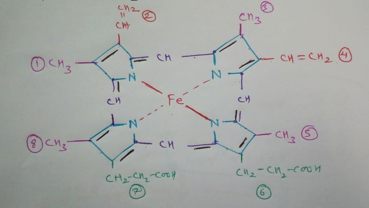 How Draw Haemoglobin Molecule Structure   Heme Molecule