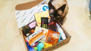 MY CAT'S FIRST SUBSCRIPTION BOX! Kitnipbox unboxing review