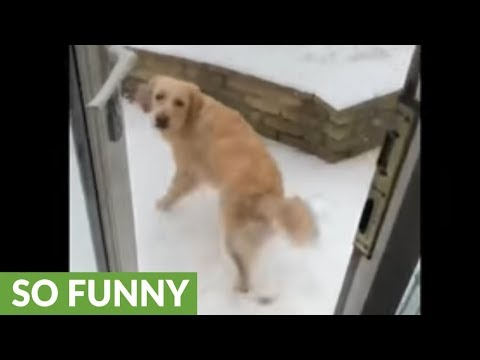 Super happy doggy plays in the snow