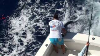 2017 Bermuda Big Game | Team Triple Play | White Marlin