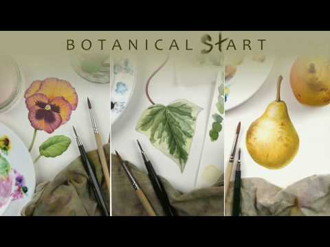 Watercolour techniques used for botanical art