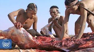 Cazadores y Depredadores del Planeta - Parte 4 thumbnail