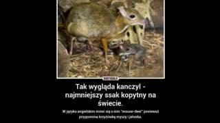 Ciekawostki o Zwierzętach #2
