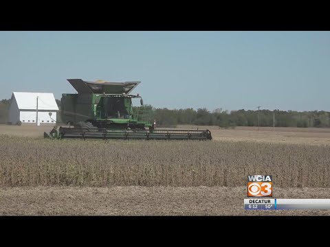 From The Farm: Declining Grain Prices