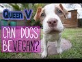 Queen V - CAN DOGS BE VEGAN? + comedy song