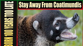 Stay Away From Coatimundi's