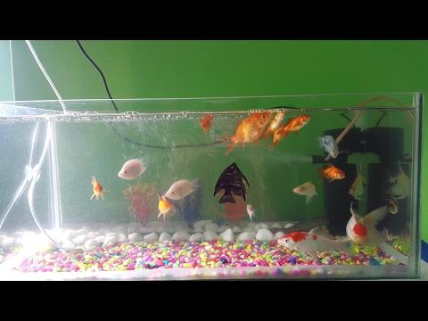 Feeding My Fishes|| Freeze Dried Tubifex Worms||