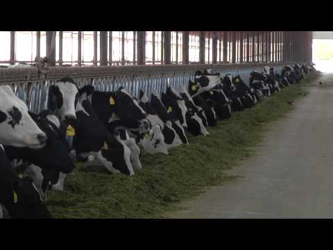Pen Movement on Dairy Farms