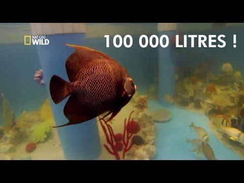 Ils plongent dans leur aquarium de 100 000 litres