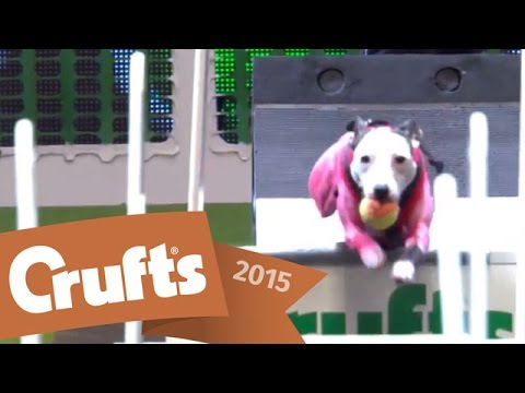 Flyball | Team Quarter Final | Crufts 2015