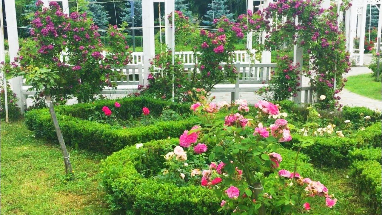 3 flower and garden creative design