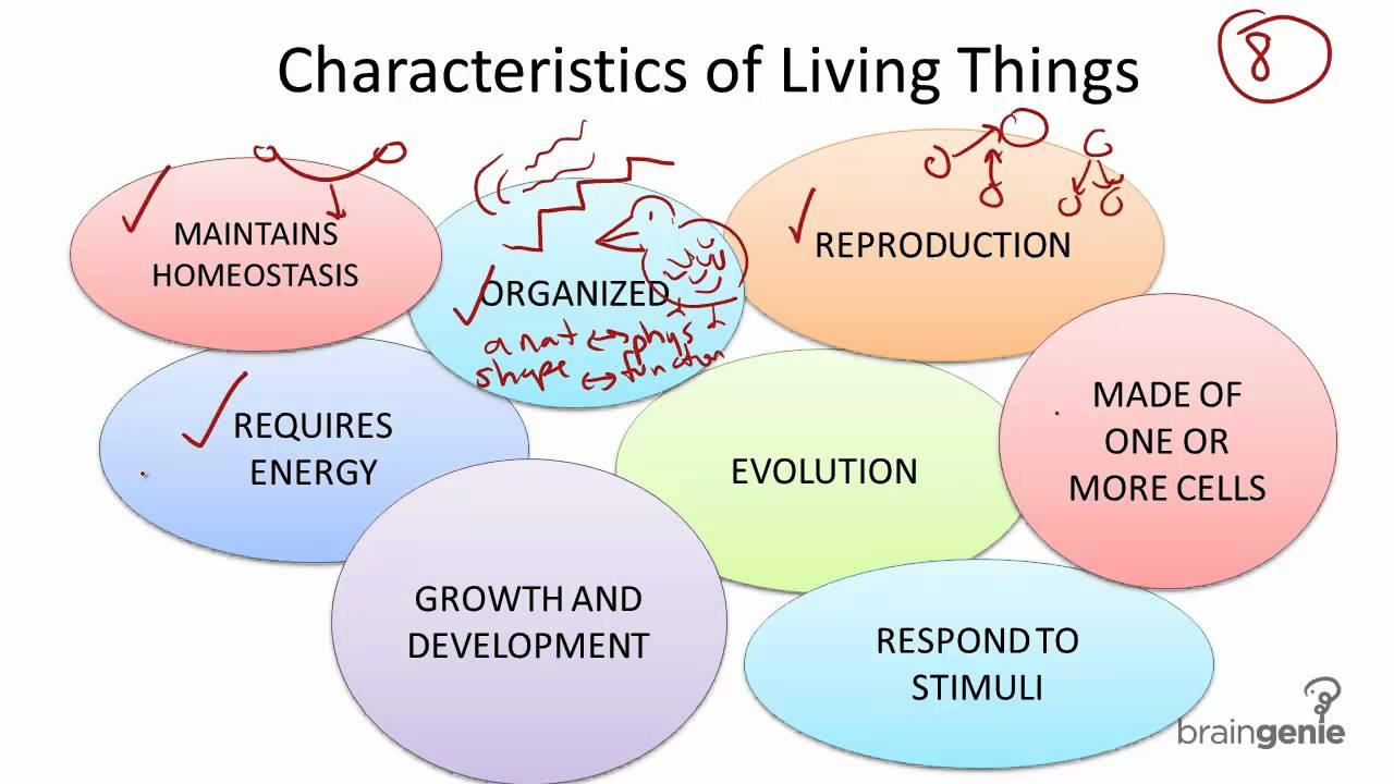 2.1.1 Characteristics of Living Things - YouTube