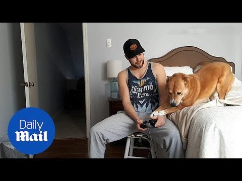 Chelsea the dog does not like her owner playing video games