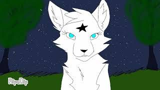 Мой новый перс виде кошки ( белая звезда)
