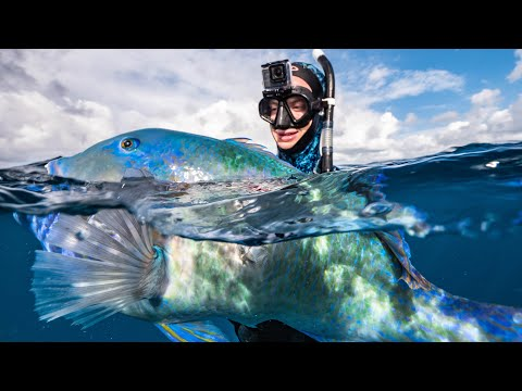 Why I LOVE Spearfishing My Hometown Of Brisbane, Australia... HUGE Biomass Of Fish