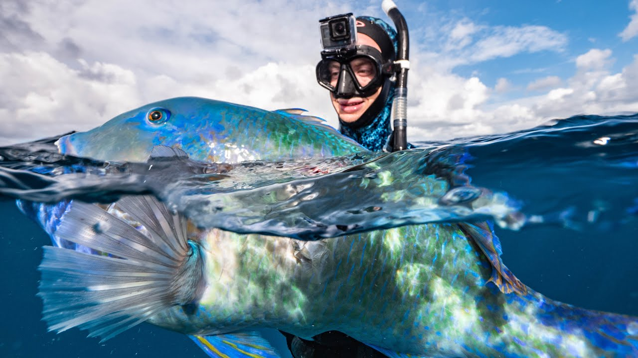 Why I LOVE spearfishing my hometown of Brisbane, Australia    HUGE biomass  of fish