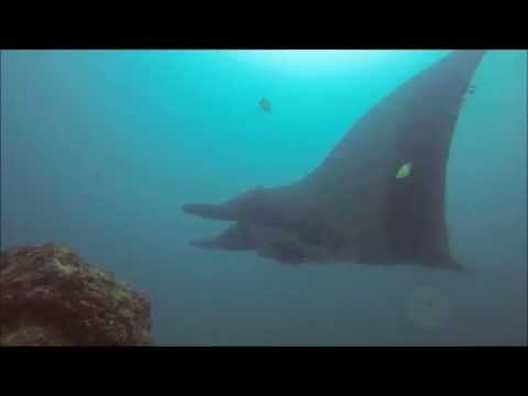 Mantarayas en Isla de la Plata, Mares Dive Center