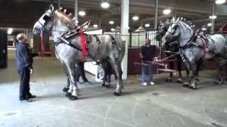 Flat Rock Draft Horses at the 2012 Indiana State Fair