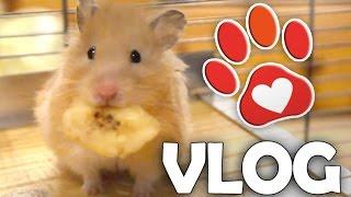 Hamster Quarantäne und Pflege (Miyukis♥Vlog)