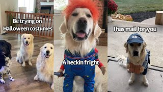 Dog Tries On Different Halloween Costumes | Which One Should He Wear For Halloween?