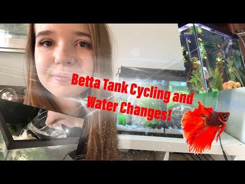 CYCLING AND CLEANING BETTA TANKS!