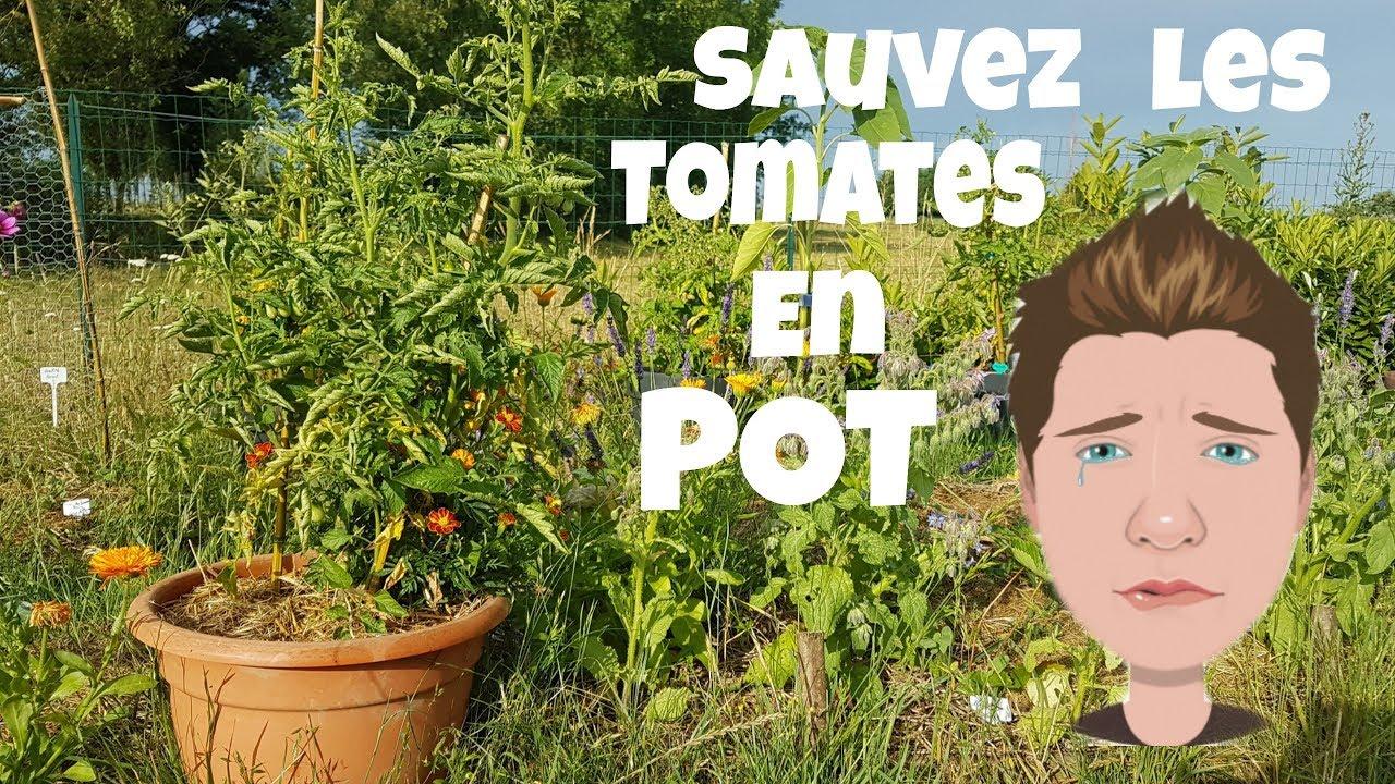 Planter Des Tomates En Pot sauvez les tomates en pot