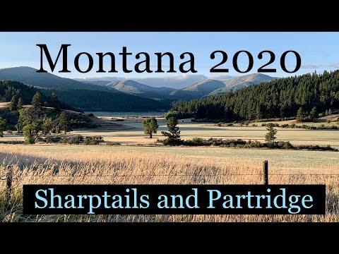 Montana 2020 Sharpies & Huns! Part 1
