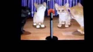 Purr Pals- My Kittens singing Toreador