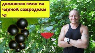 домашнее вино из черной смородины ч 1 постановка дегустация