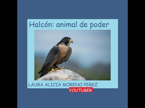 Halcón: Animal De Poder
