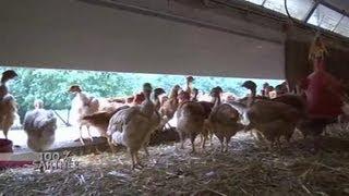 100% Sarthe et les poulets de Loué (Noyen)