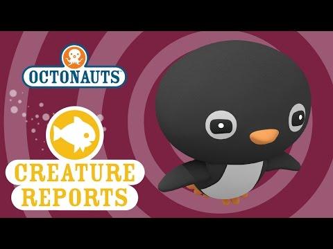 Octonauts: Creature Report - Adelie Penguin