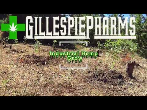 Oregon Industrial Hemp Grow 6+ Acres 7,700 Plants!
