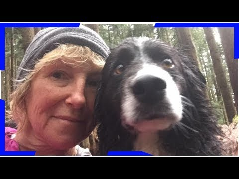 Missing dog walker, three pups found alive in coquitlam, b c  Breaking Daily News