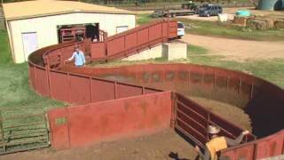 Cattle Handling Tips - Facilities