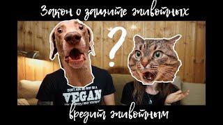 Почему  новый ЗАКОН О ЗАЩИТЕ ЖИВОТНЫХ вредит животным? || Vegan Family || Как помочь животным?