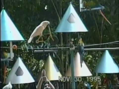 Pinecrest, Florida – Parrot Jungle (1995)