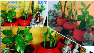 Best Indoor Plants Decoration/ How to Decorate Home With plant/craftzone4u-32