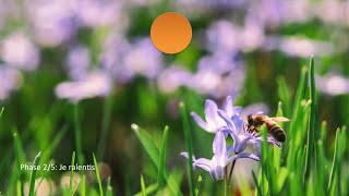 Coherence cardiaque: printemps