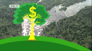 What economic value do forests have? | Global Ideas