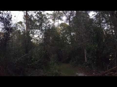 Basin Swamp Community