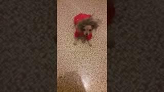 Как сломать собаку