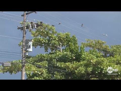 Vegetação na rede é a principal causa de falta de energia em SC