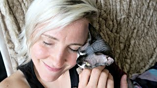 A Brief History of Hannah Hart (+ meet kitten Charles!)