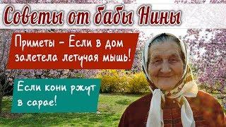 Баба Нина - Приметы - Если в дом залетела летучая мышь! Если кони ржут в сарае!