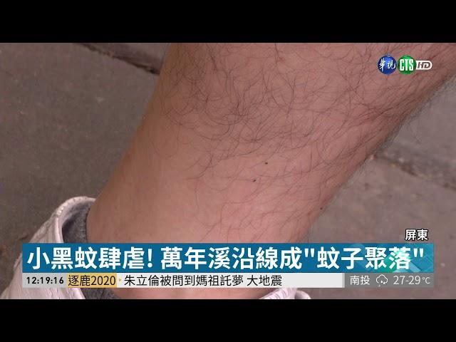 屏東萬年溪小黑蚊肆虐 記者遭