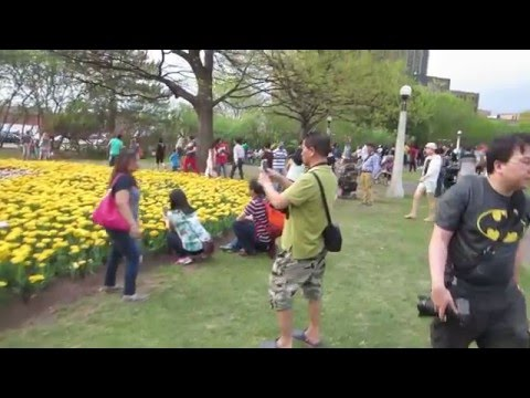 Canadian Tulip Festival / Festival Canadien des Tulipes in Ottawa Canada
