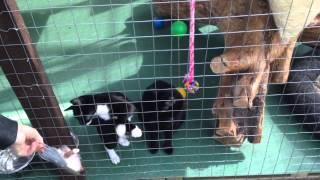 видео Кошачья мята или волшебная трава для кошек