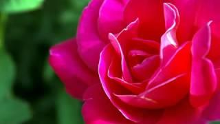 Ikrar Ho Na Jaye (Male) [Full Song] (HD) With Lyrics - Zinda Dil