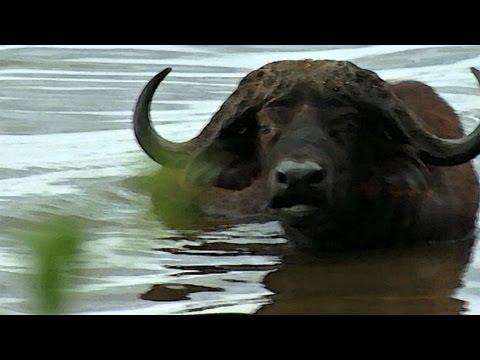 African Safari Video - A Travelogue - Kenya Part 5 - Lake Nakuru -www.AfricanSafaris.travel